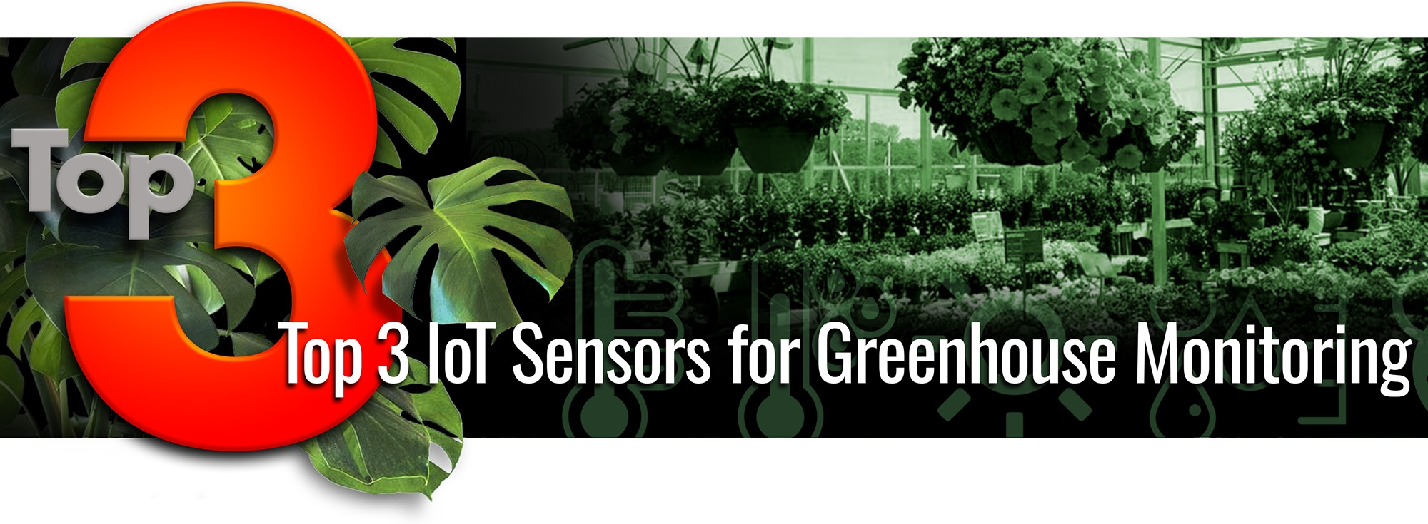 Top 3 IoT Sensors for Greenhouse Monitoring